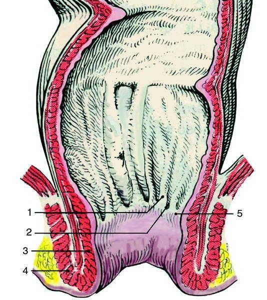 estimulación de la próstata por vía rectal dura