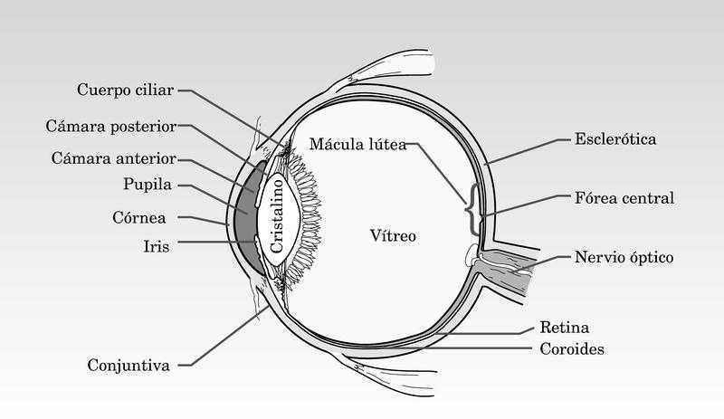 Pequeñas afecciones y urgencias oftalmológicas .Actuación inmediata ...