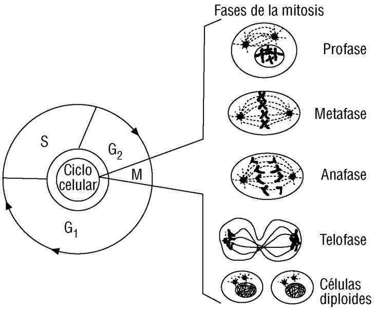 Genética Y Medicina Molecular En Cardiología Revista