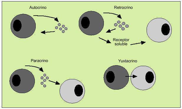 Estructura Y Funcion De Las Citocinas Medicina Integral