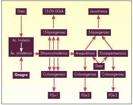 diabetes con ácido gamma linolénico