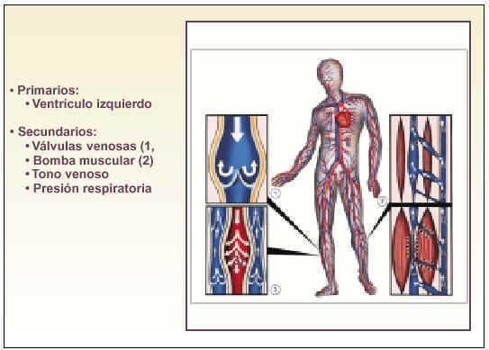 Hipertensión venosa pdf