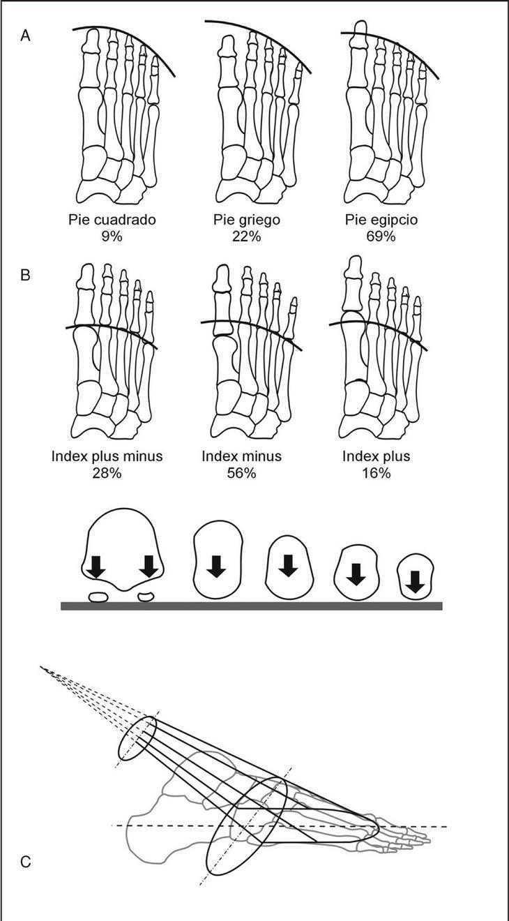 Anatomía funcional y biomecánica del tobillo y el pie | Revista ...