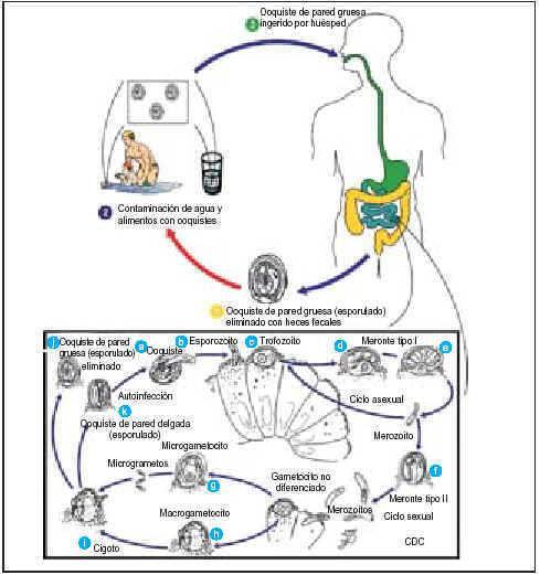 intraductalis papilloma mri fejhallgató ellen