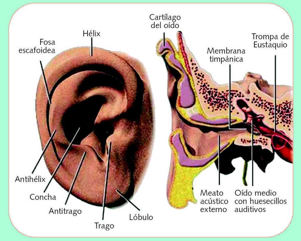 Otitis externa y limpieza auricular | Farmacia Profesional