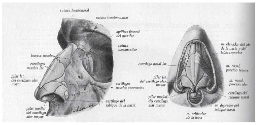 Sondas endonasales como causa de las úlceras por presión en el ...