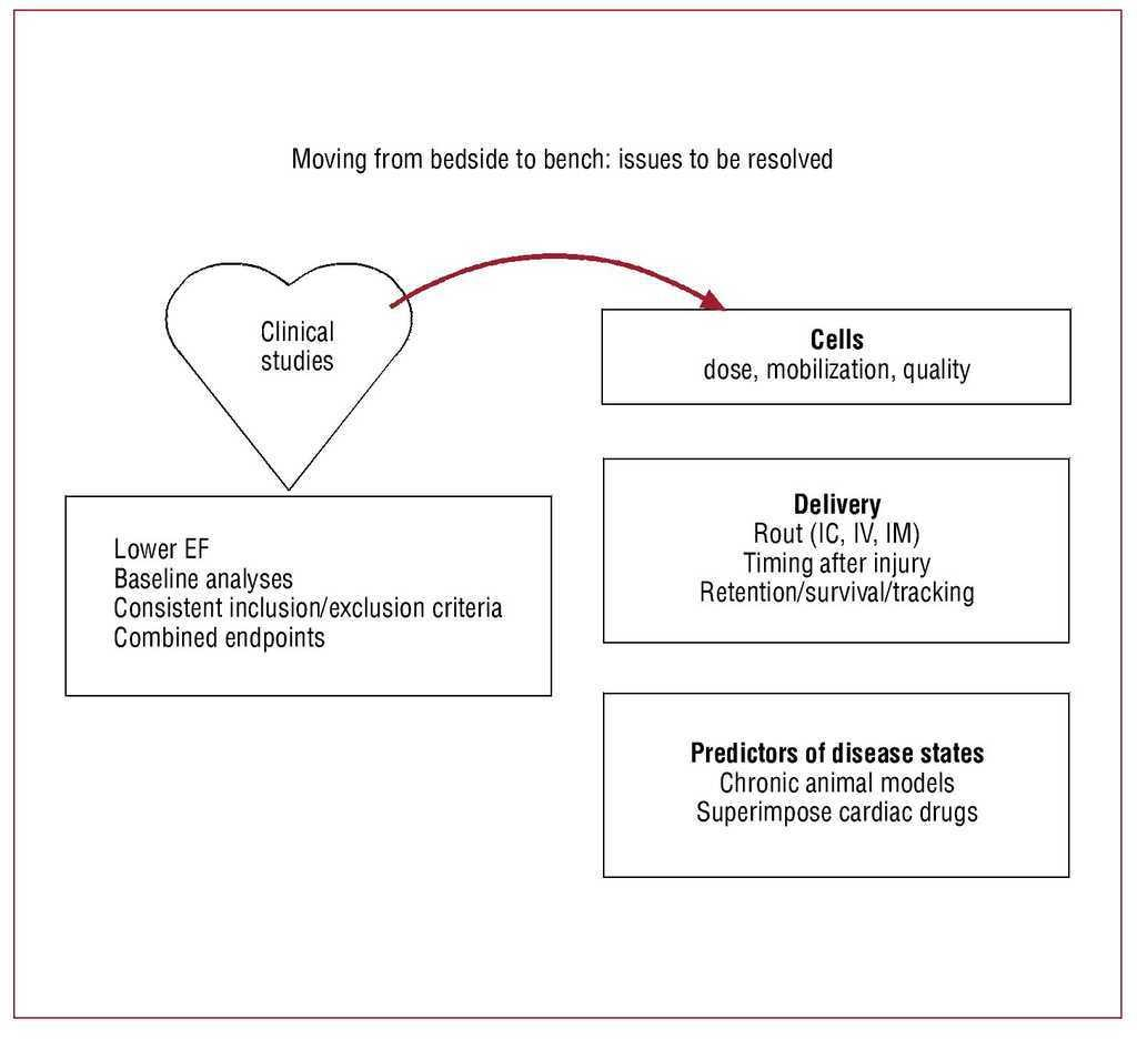 The Basics of Cell Therapy to Treat Cardiovascular Disease