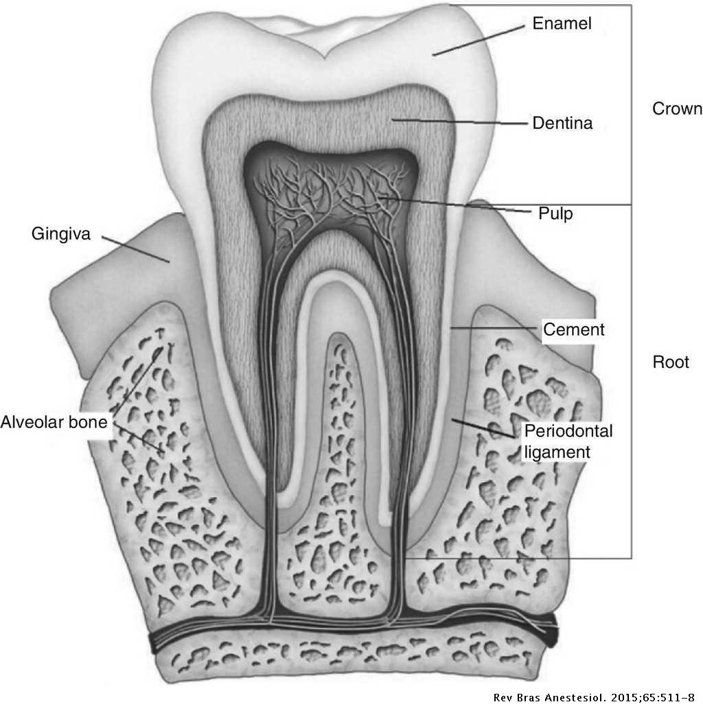 Tooth injury in anaesthesiology   Brazilian Journal of
