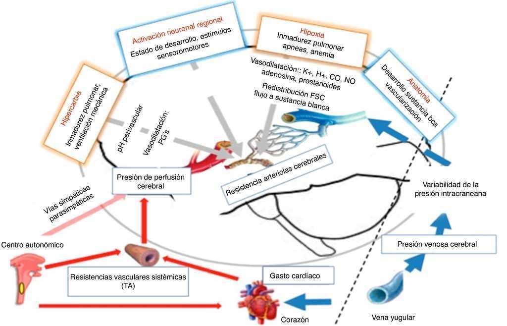 Estrategias de ventilación a favor de la neuroprotección: ¿qué ...