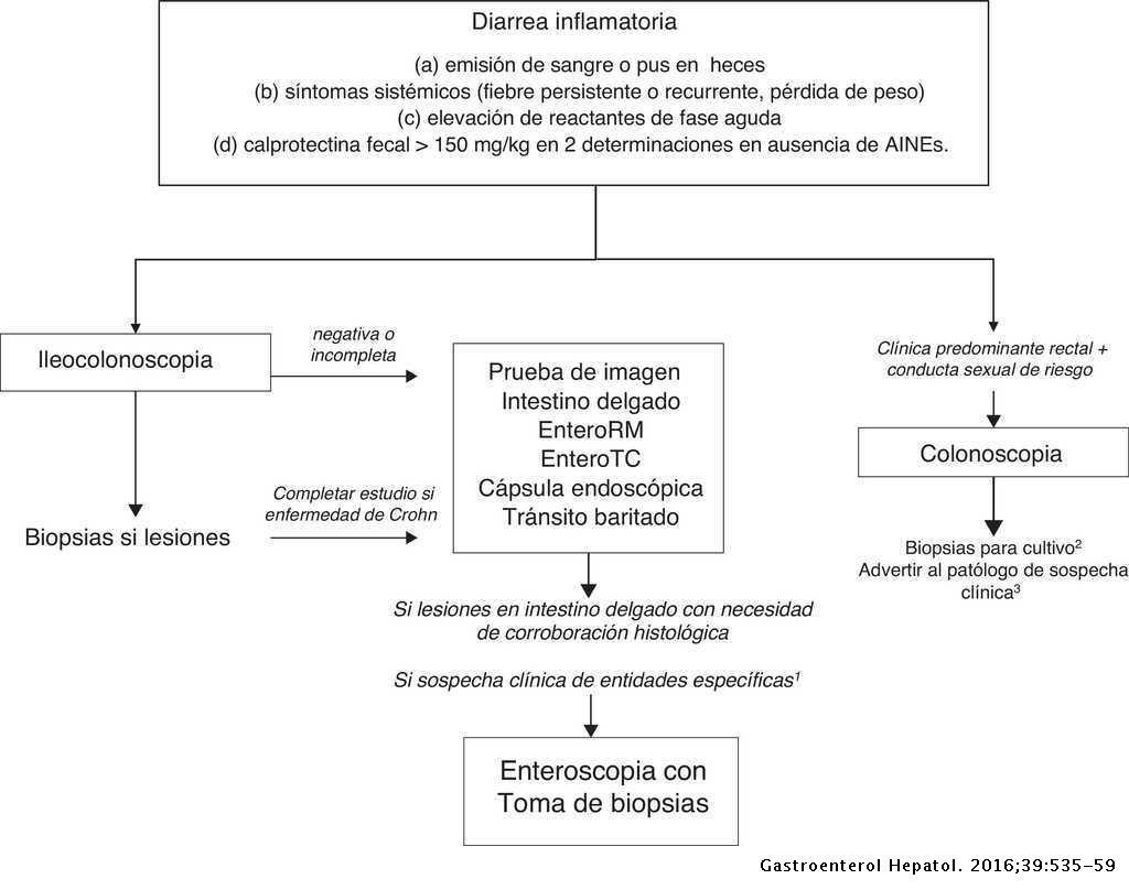 Diarrea crónica: definición, clasificación y diagnóstico