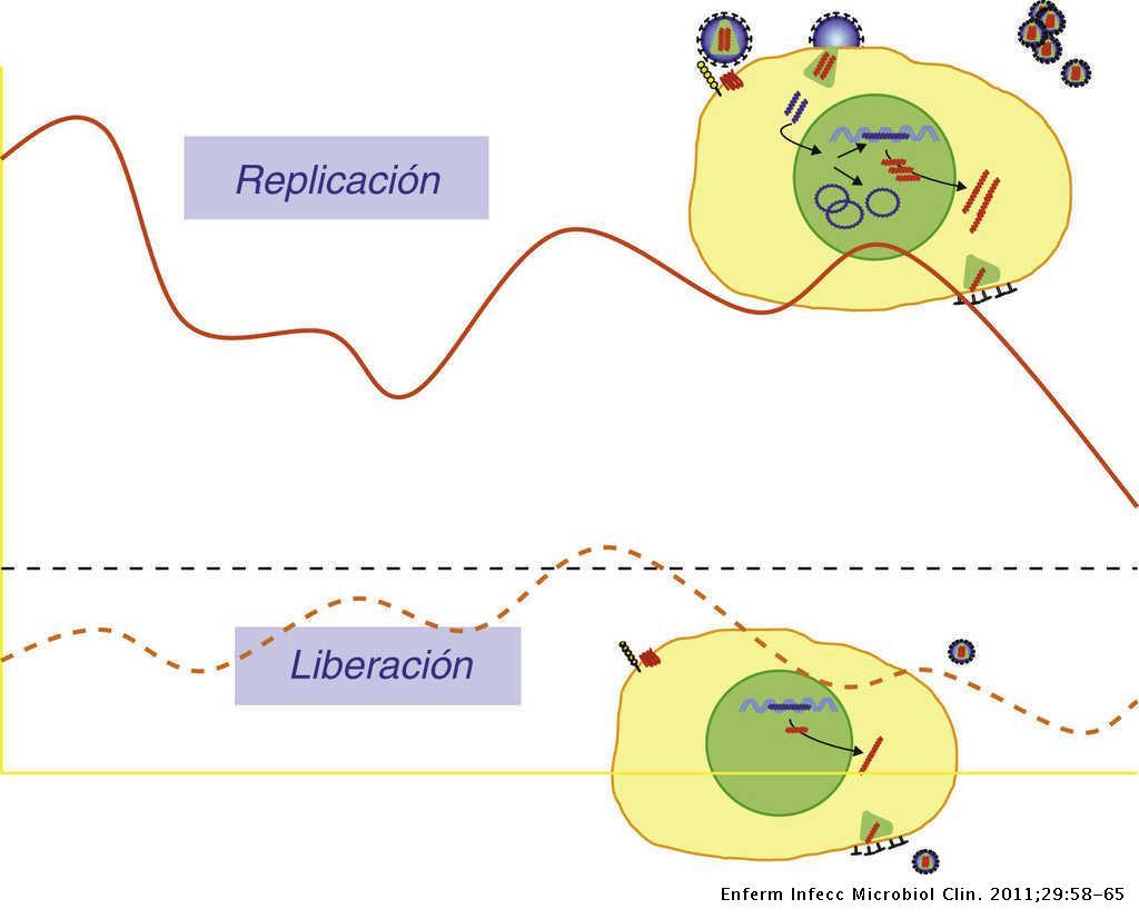 Características Virológicas Del Vih Enfermedades