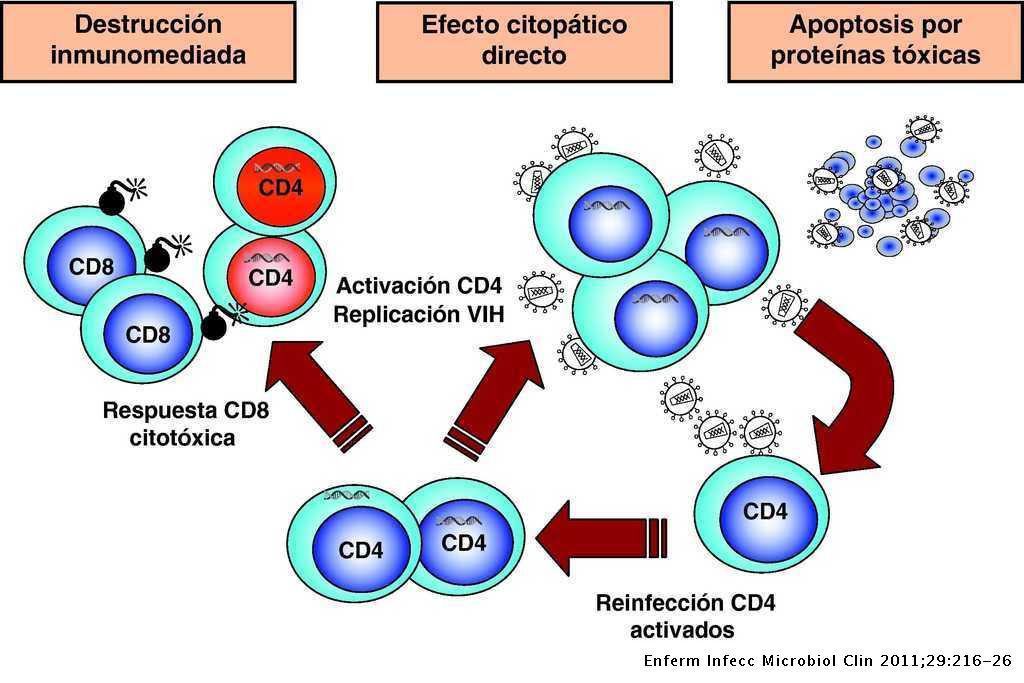 da7498a69f5 Inmunopatogenia de la infección por el virus de la inmunodeficiencia ...