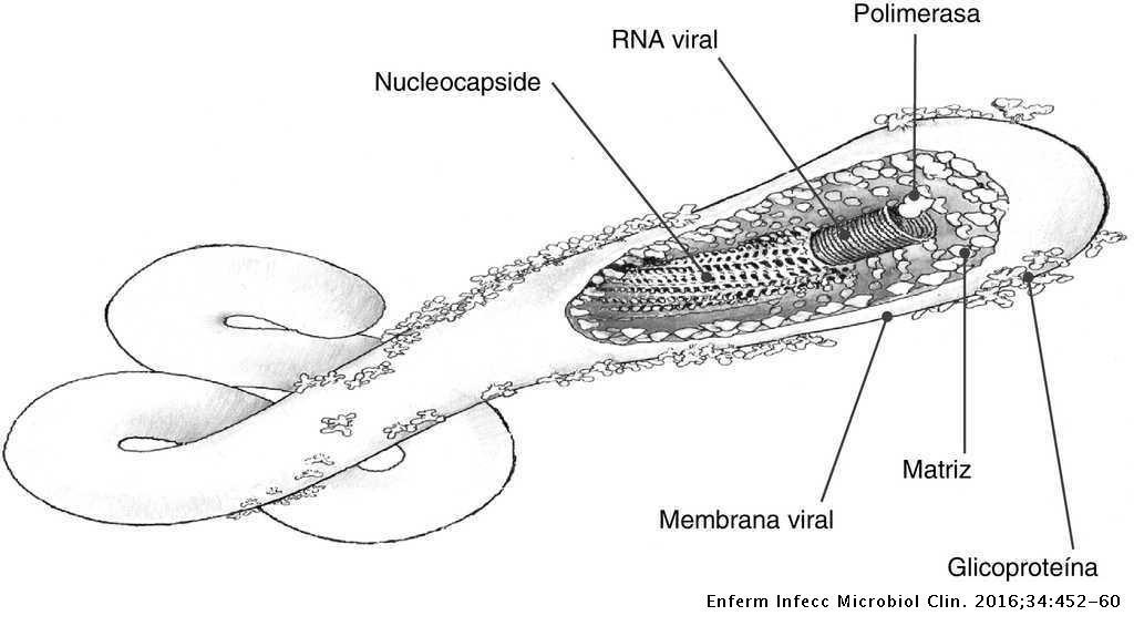 Nyugat-afrikai Ebola-járvány