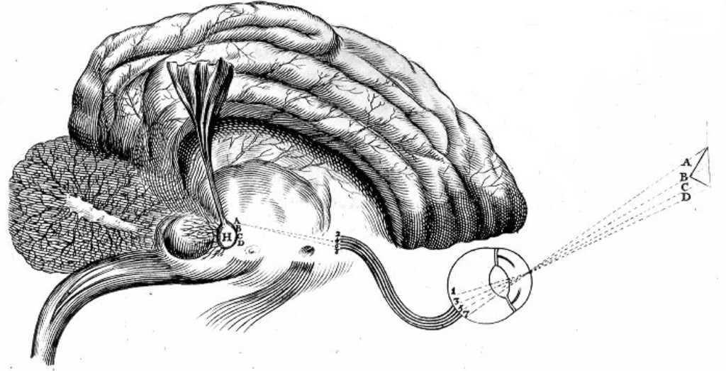 La glándula pineal como instrumento físico de las facultades del ...