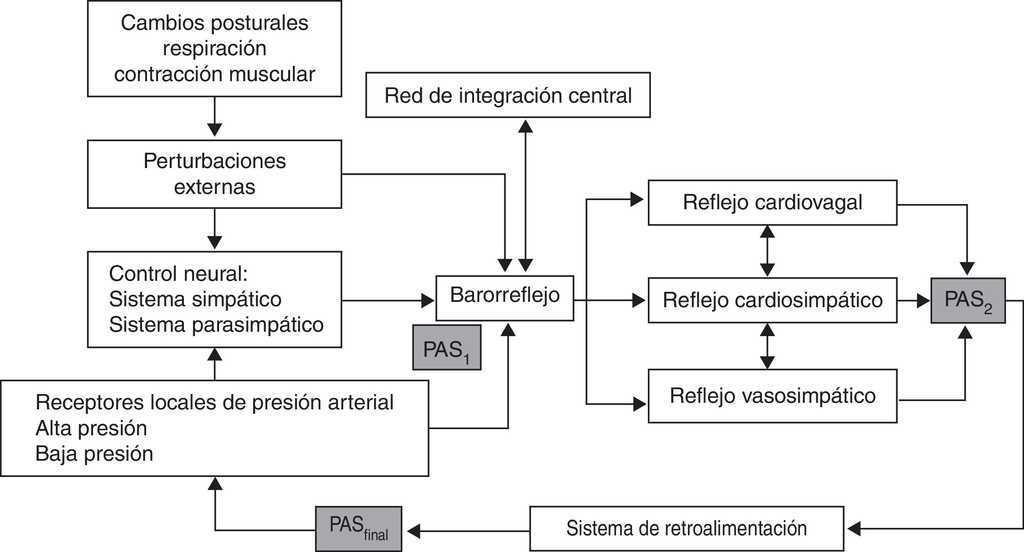 Fisiopatología del síncope neuralmente mediado | Neurología