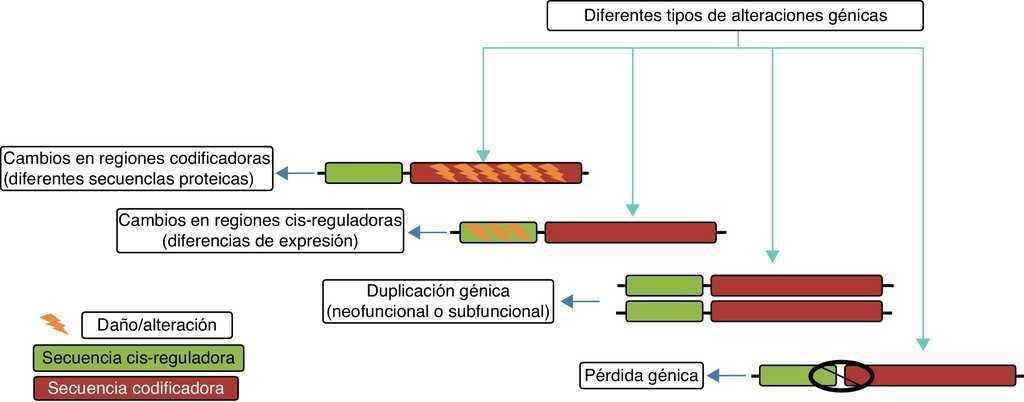 Evolución y genómica del cerebro humano | Neurología