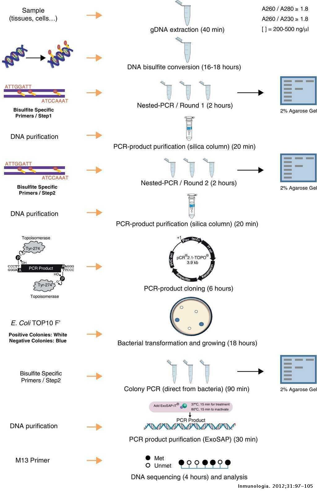 Bisulfite genomic sequencing to uncover variability in DNA