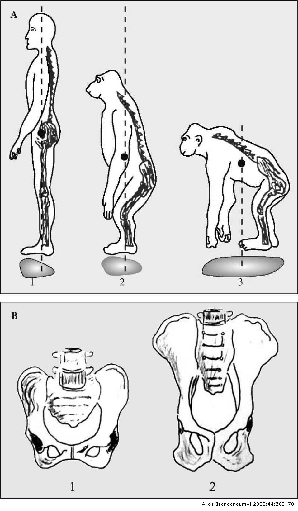 curso dibujo anatómico :: Centroartlanuevaescuela