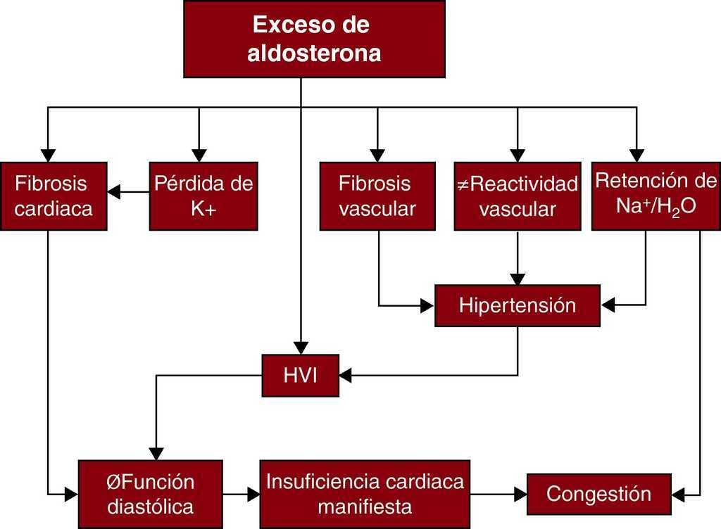 El hipotiroidismo frente al hipertiroidismo causa hipertensión