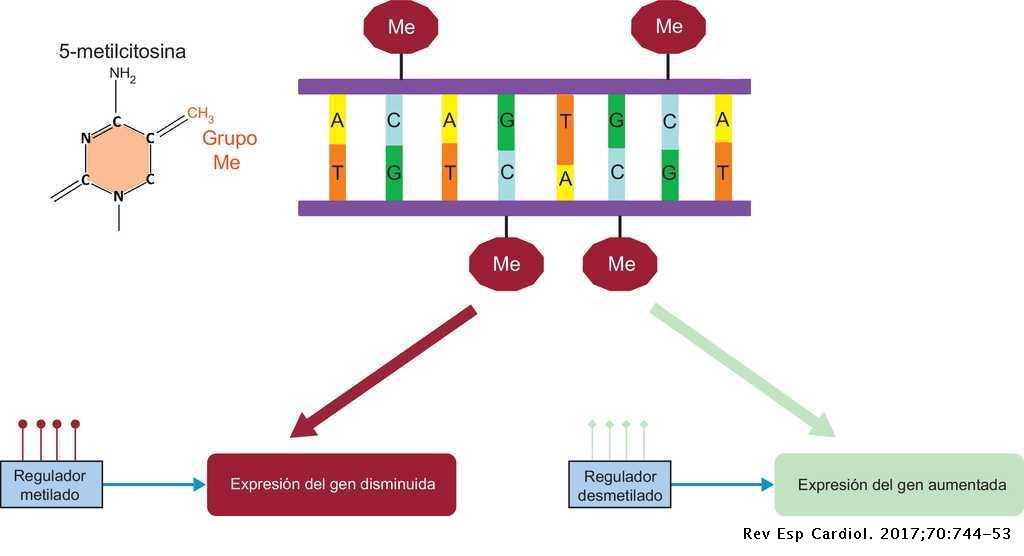 Conceptos Básicos En Biología Molecular Relacionados Con La
