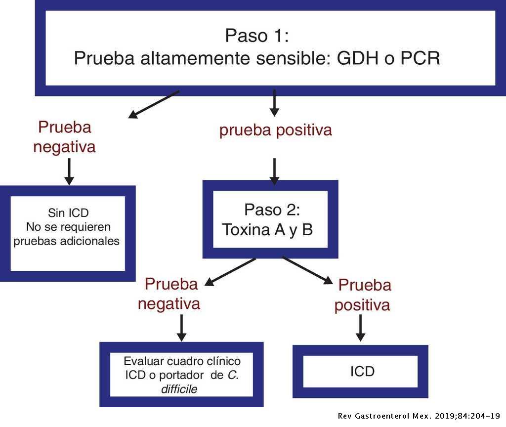 Clostridium difficile Toxina A/B