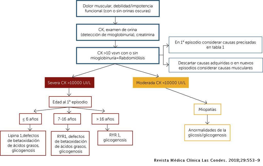 Rabdomiolisis Metabolica Actualizacion Revista Medica Clinica Las Condes