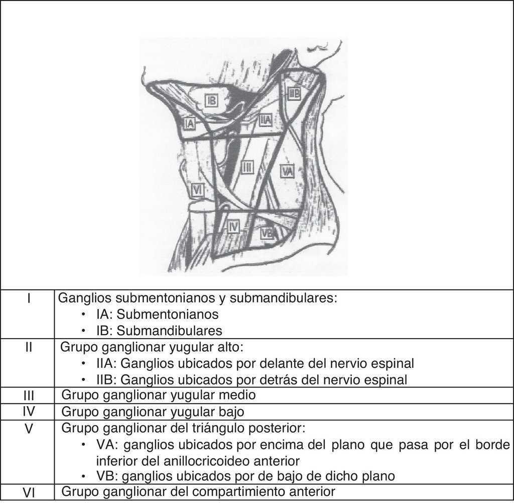 Afectación ganglionar en el cáncer de laringe y actitud terapéutica ...