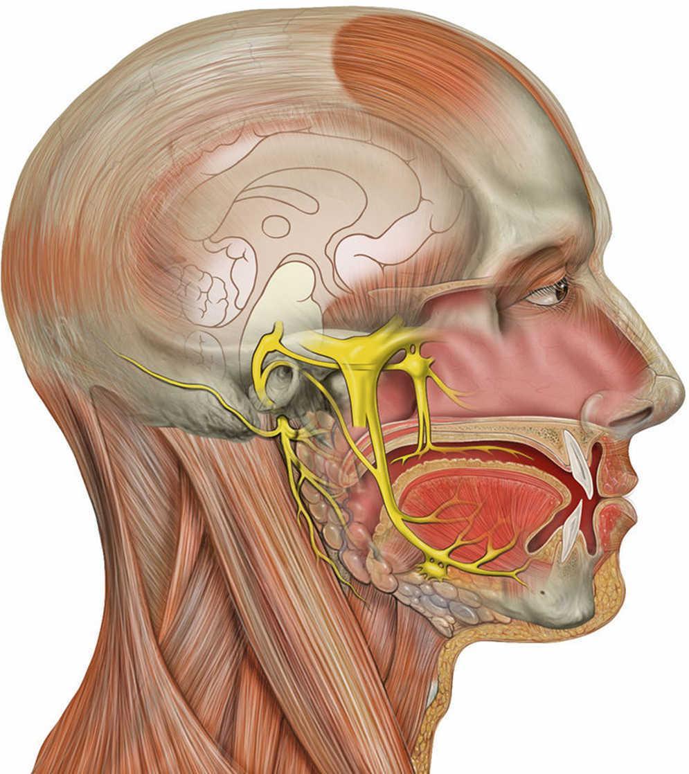Actualización en el manejo de la neuralgia del trigémino | Medicina ...
