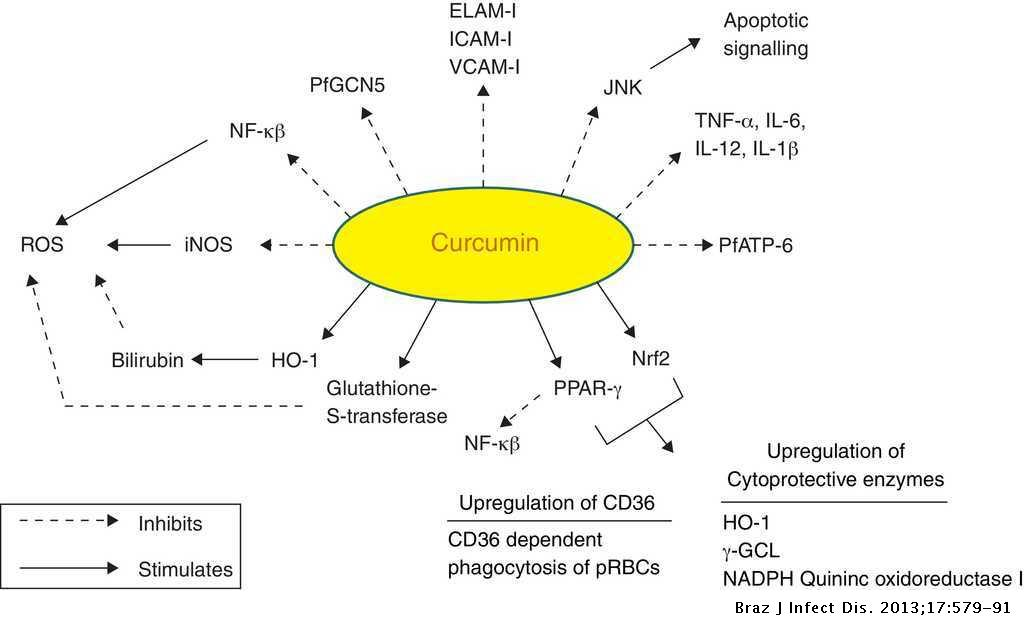 Modulation of cerebral malaria by curcumin as an adjunctive