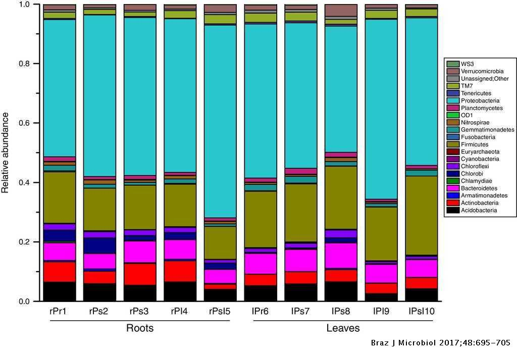 Illumina-based analysis of endophytic bacterial diversity of tree