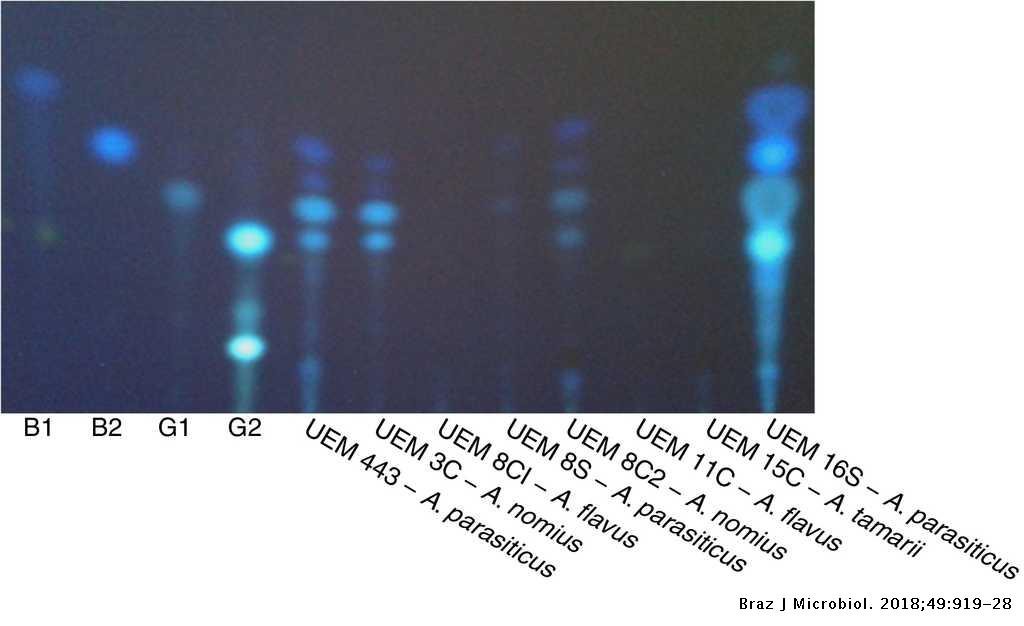 The occurrence of aflatoxigenic Aspergillus spp  in dairy