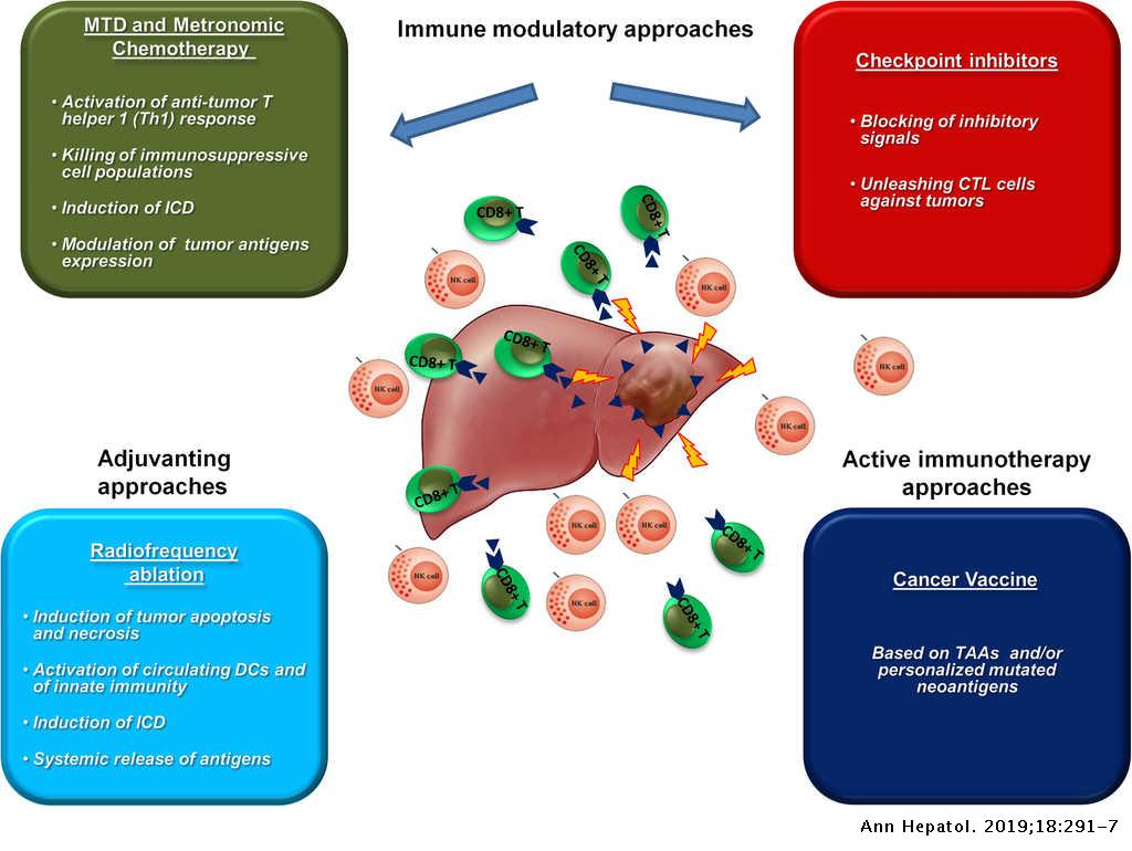 Immunotherapy in hepatocellular carcinoma | Annals of Hepatology
