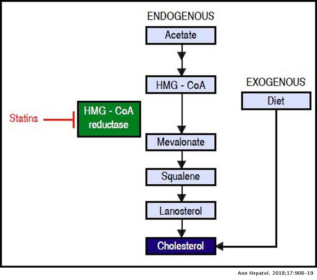 Immunometabolic Effect of Cholesterol in Hepatitis C