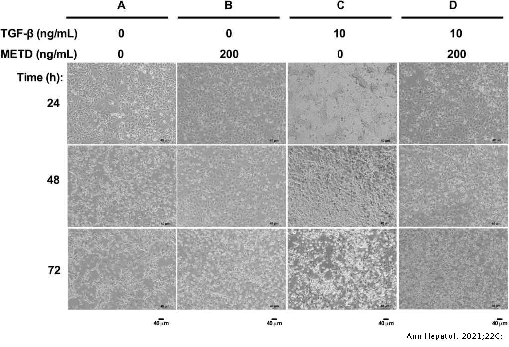 methanolic extract of turnera diffusa