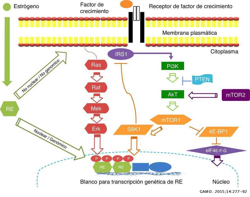 cancer hormonal positivo medicament pentru îndepărtarea viermilor la copii
