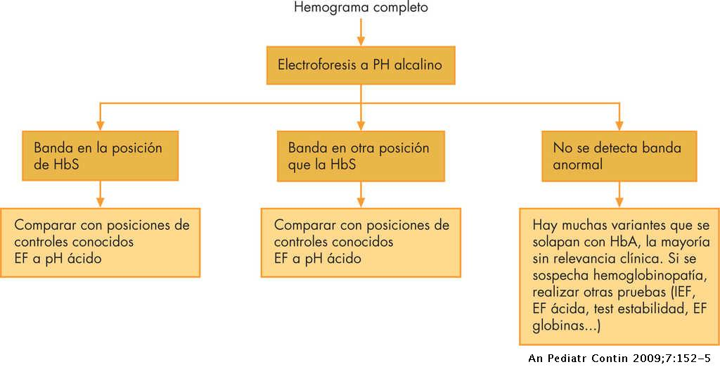 Interpretación De La Electroforesis De Hemoglobina Anales