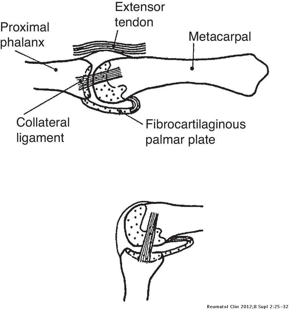 Clinical Anatomy Of The Hand