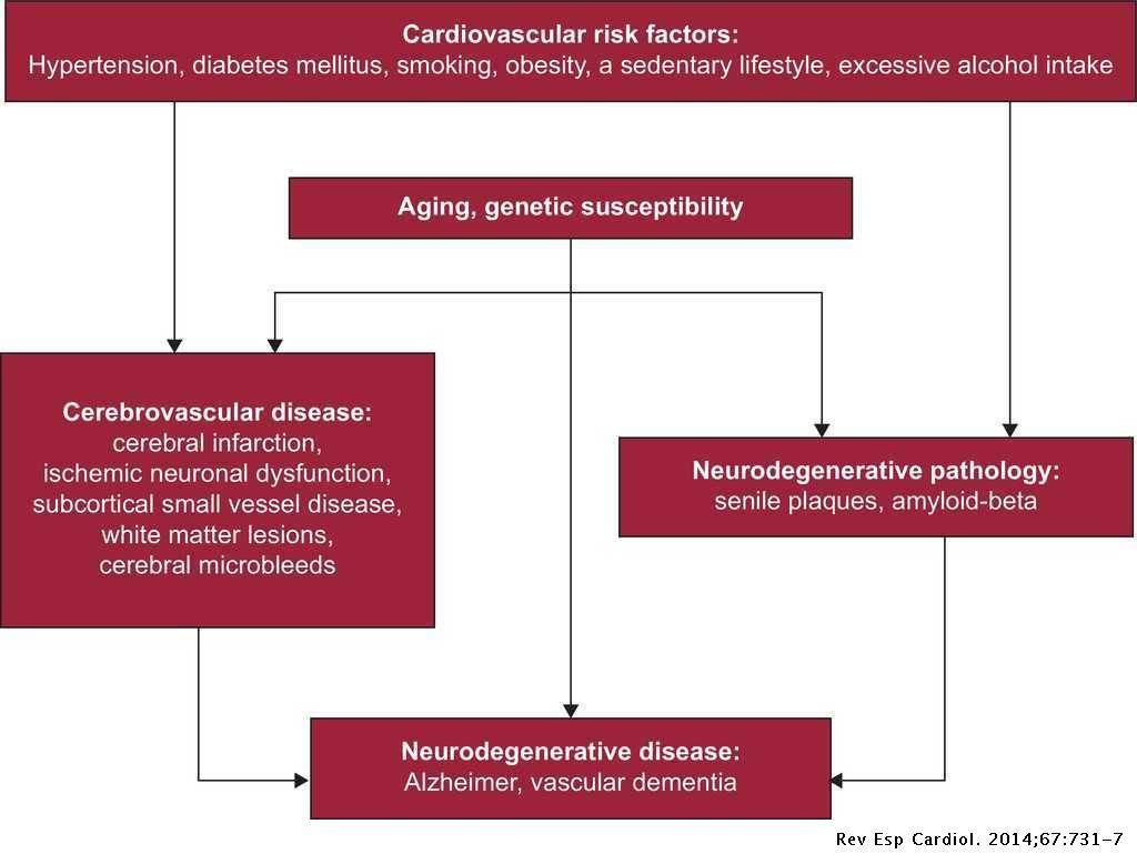 Promotion of Cardiovascular Health at Three Stages of Life