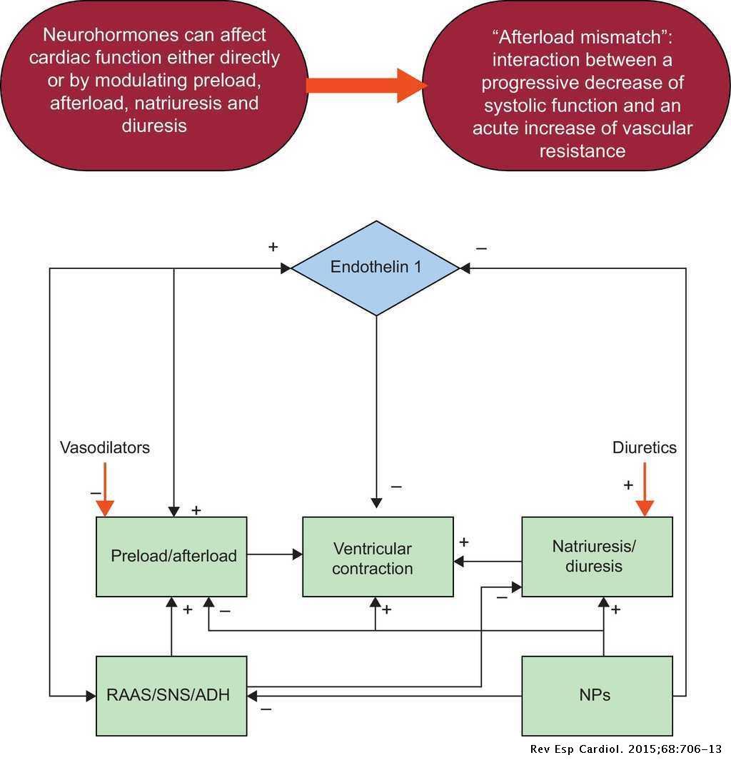 Drug Therapy for Acute Heart Failure   Revista Española de