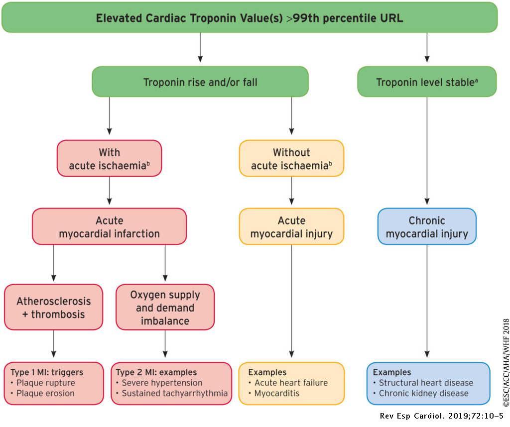 Infarction patho of myocardial Myocardial Infarction