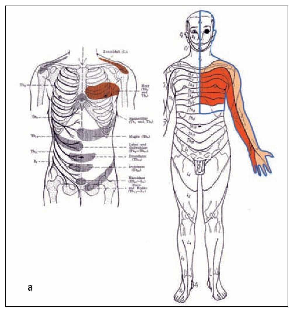 Anatomía segmentaria - Acupuntura segmentaria | Revista ...
