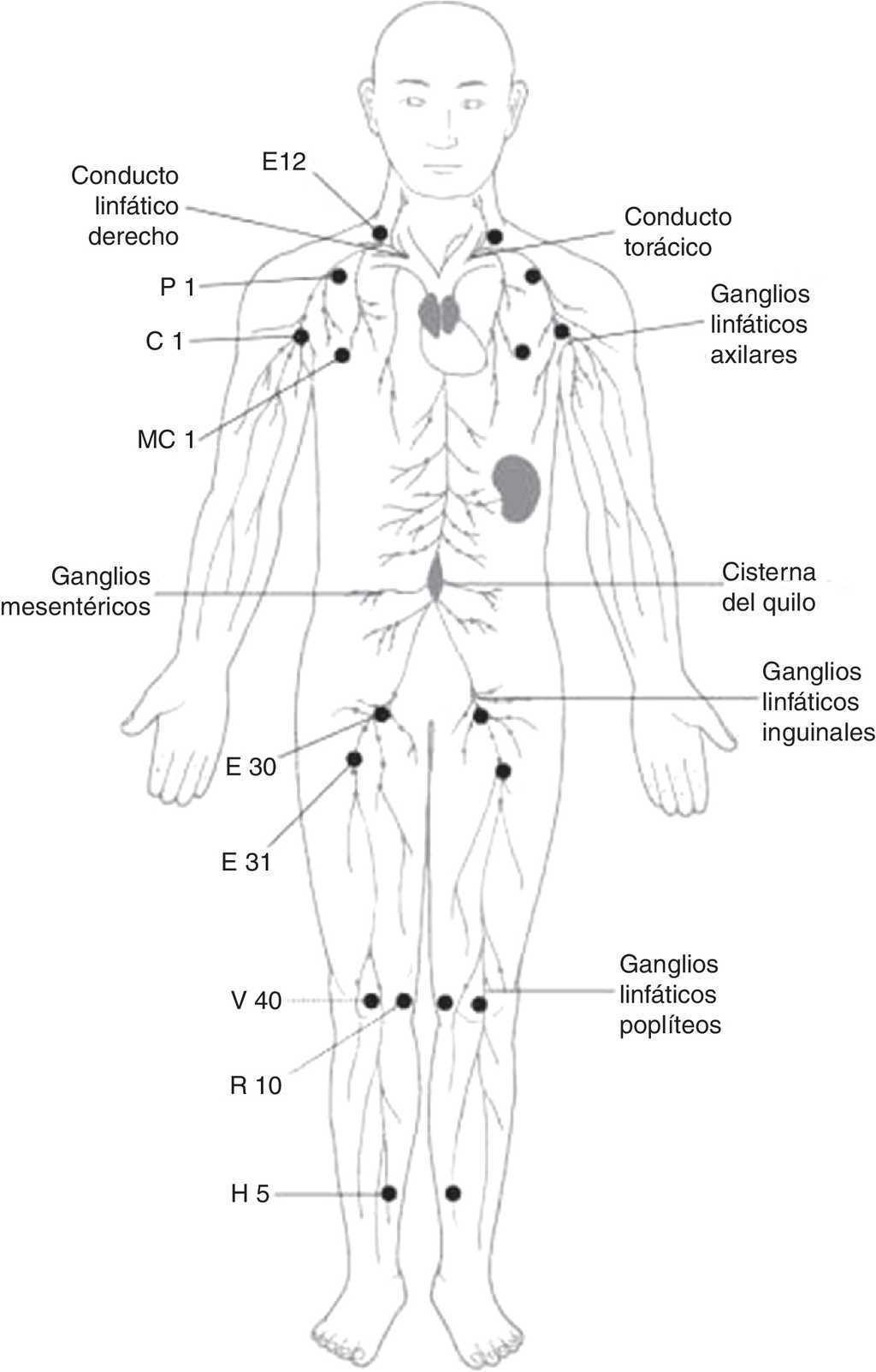 Meridianos distintos (Jīng Bié) y sistema linfático, comparación ...