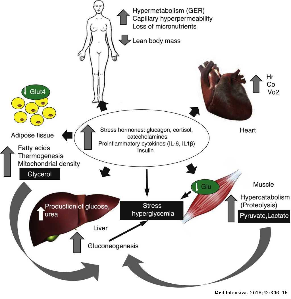 Update on metabolism and nutrition therapy in critically ill