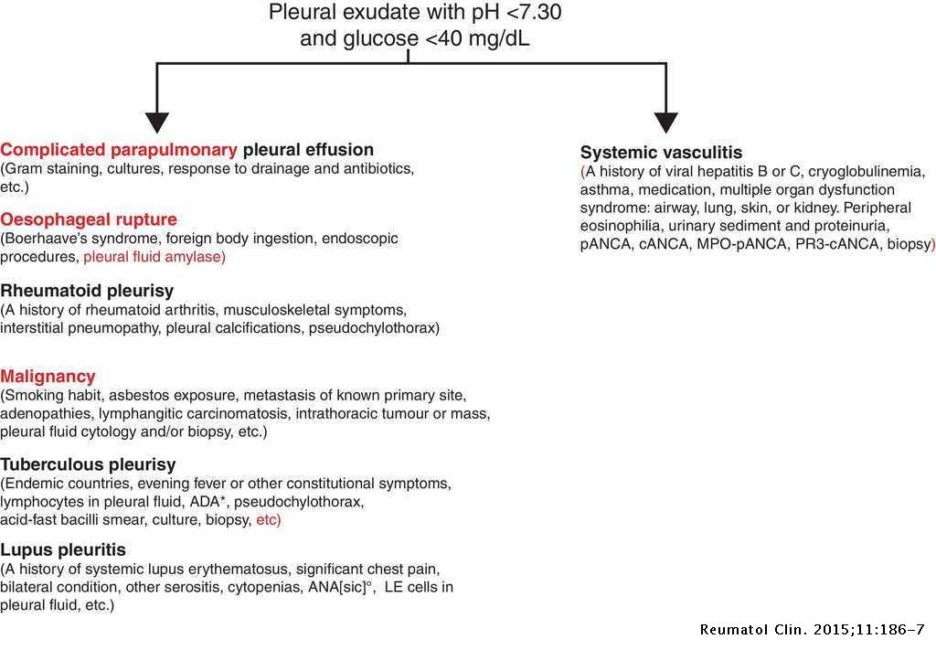 Vasculitic Pleural Effusion Reumatologia Clinica English Edition