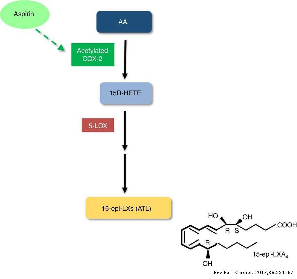 5-lipoxygenase