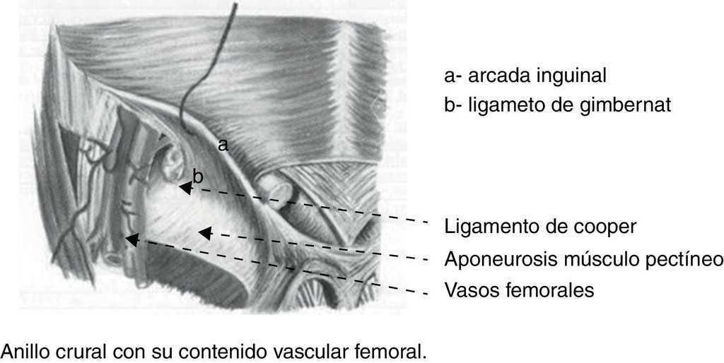 Contribuciones de Don Antonio Gimbernat a la anatomía y cirugía de ...