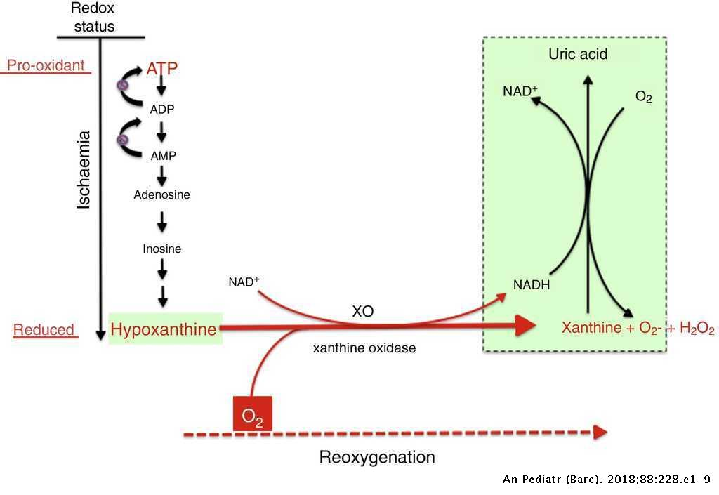Oxidative stress in perinatal asphyxia and hypoxic-ischaemic
