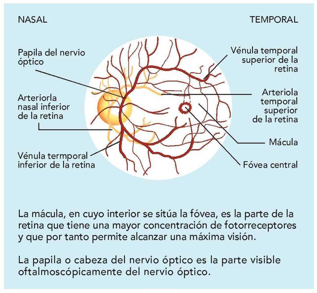 Enfermedades oculares relacionadas con signos de hipertensión