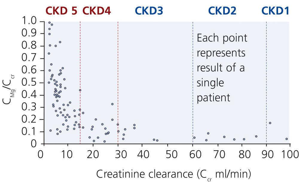 Magnesium ' its role in CKD   Nefrología (English Edition)