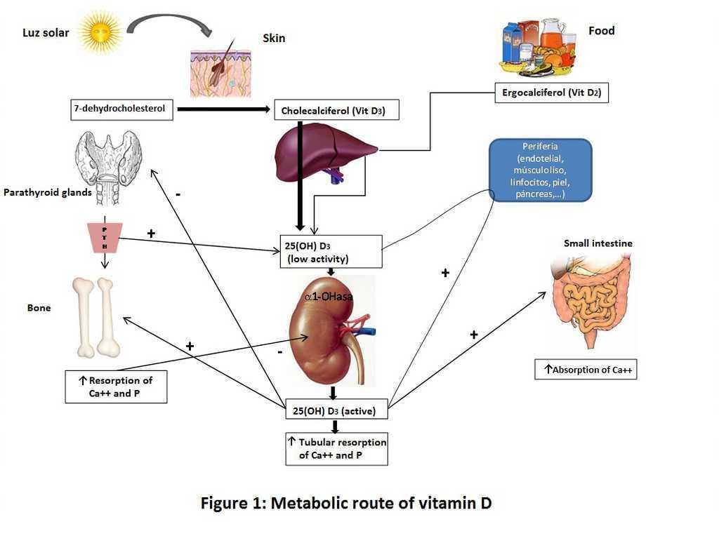 vitamina D3 prostatitis